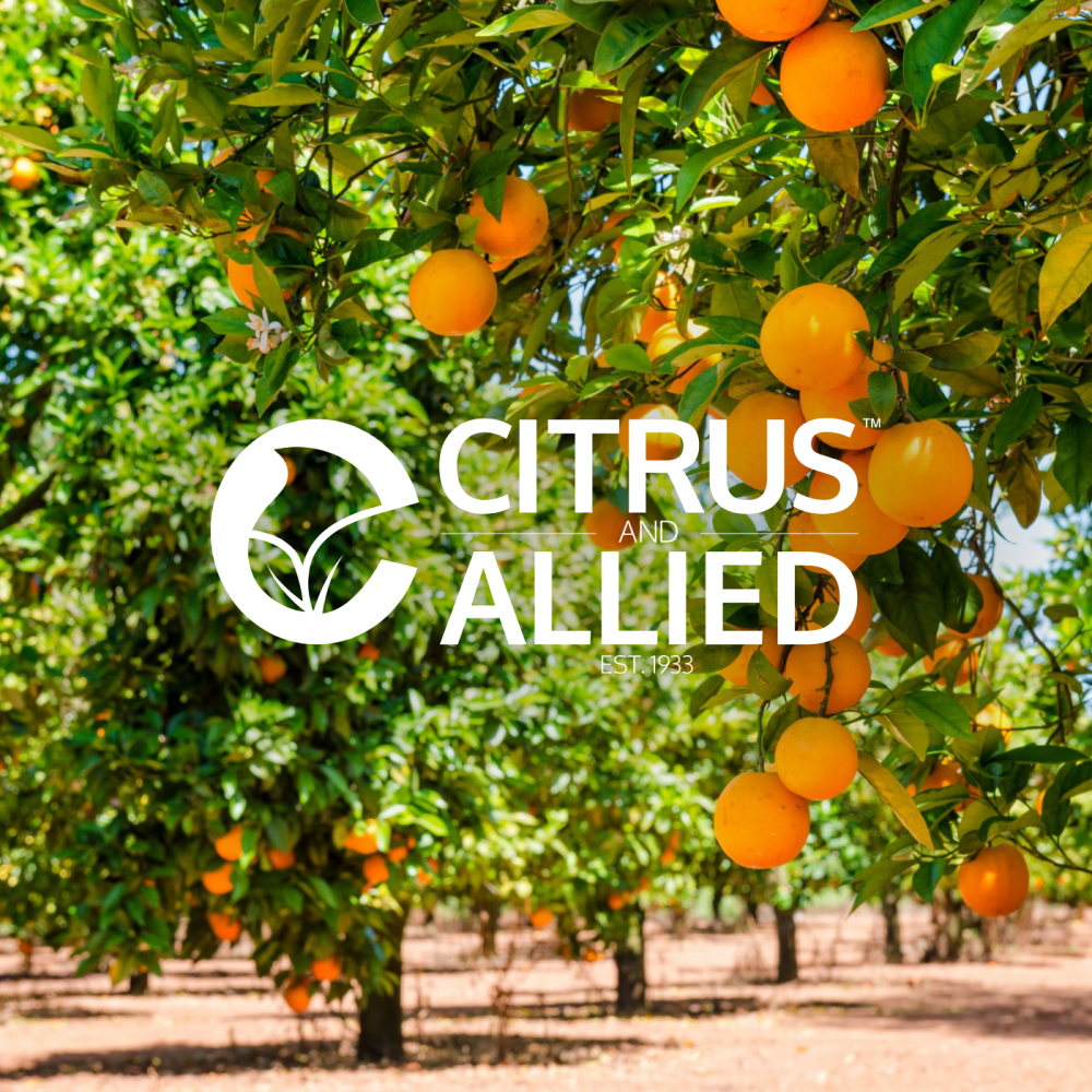 Citrus and Allied